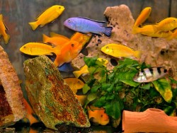 Pécsi akvárium-terrárium Pécs