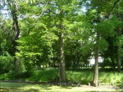 Borsodivánkai kastélypark Borsodivánka