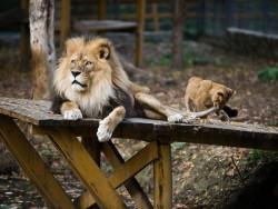 Nyíregyházi Állatpark Nyíregyháza