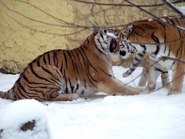 állatkert bekapcsol